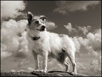 Rick Stein's dog, Chalky. Picture: Craig Easton
