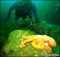 Cephalopod (Gavin Parsons)