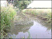 Wilts & Berks canal - image courtesy bbc.co.uk/wiltshire