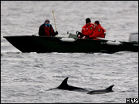 Rescuers in a boat near the trapped dolphins