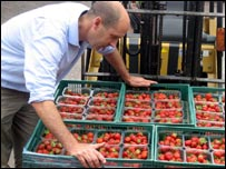 Strawberries being loaded