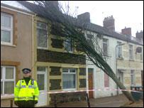 Fallen tree in Cardiff