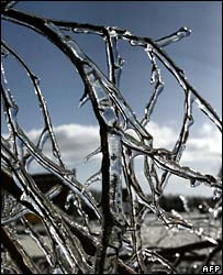 Frozen branches in Saratoga Springs, New York State