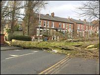 Fallen tree on Nell Lane, Chorlton, Greater Manchester - pic supplied by Steven Jones