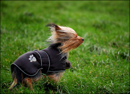 Dog facing into the wind