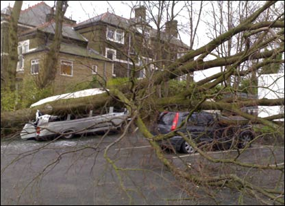 A tree crushes two vehicles in Burnley