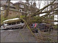 A fallen tree (photo: BBC News website reader David Fergus)