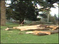 Damaged trees at Wollaton Park in Nottingham