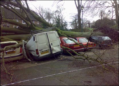 Cars crushed by a tree