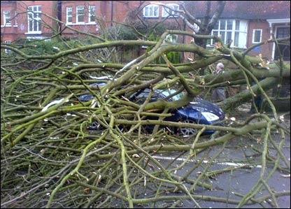 A tree crushing a car