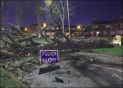 Tree down in Hertfordshire