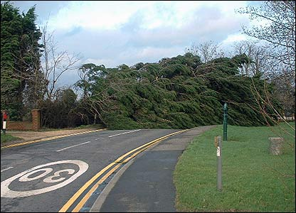 Tree across road in Essex