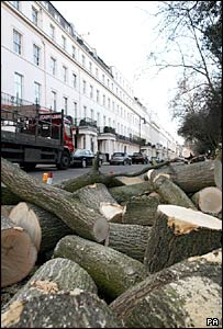 A fallen tree is chopped up in Eaton Square, London