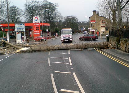 Tree blocking road in Leeds