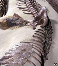 Dinosaur bones (file image)