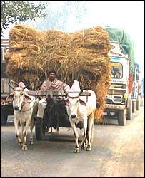 Bullock and cart