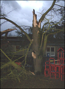 Tree hit by storm in Antwerp