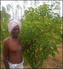 Indian farmer with Jatropha bush