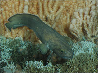 Rost Reef marine life: Picture University of Plymouth