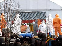 South Korean workers cull chickens in December 2006