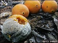 Naranjas dañadas.