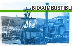 Biocombustibles: ¿Latinoamérica al rescate?