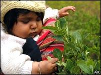 Niña indígena juega con planta de coca