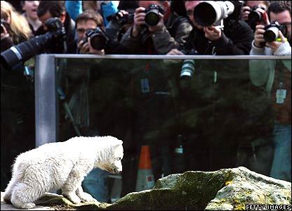 Knut and cameras