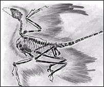 Microraptor   Image: PNAS