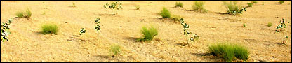 Sandy landscape in Yobe