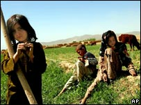 Afghan children tending cattle