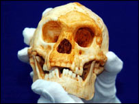 Cast of Homo floresiensis skull  Image: PA