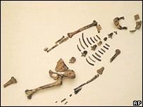 Lucy skeleton, AP