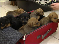 Puppies found in suitcase