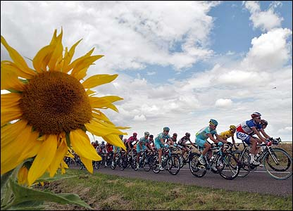 Riders pass sunflower fields