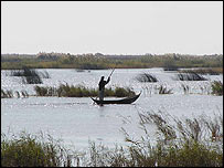 Iraq marshes, BirdLife International