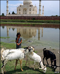 Goats in India