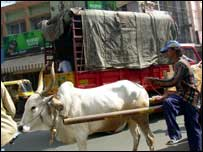 Bullock cart in road, Bangalore