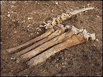 Huesos animales