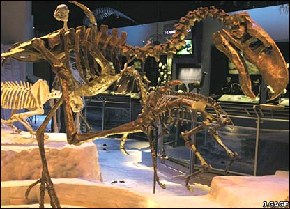 Fossil remains of terror bird (J.Gage/Florida Museum of Natural History)