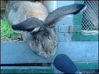 Robert the bunny and a microphone