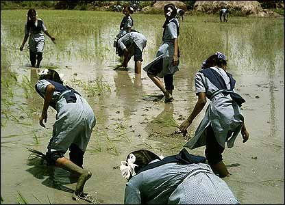 Girls planting rice