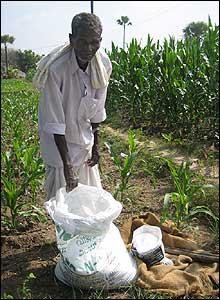 An old farmer in his maze field