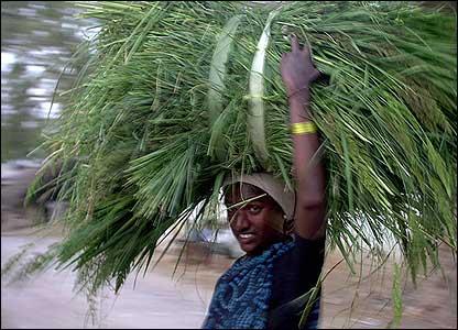 A woman carrying fodder