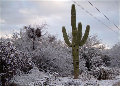 Snow-covered cactus is a rarity in Phoenix