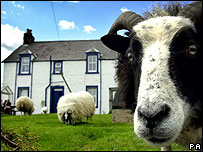 Sheep in front of house at Hightae, Dumfriesshire