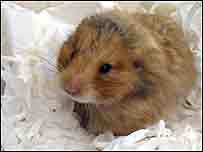Hamster rescued from bin area of flats