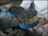 Worker cans beluga caviar