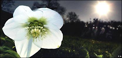 Florecimiento en invierno