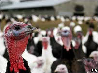 Turkey farm
